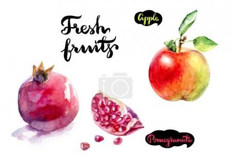 Apple, pomegranate illustration