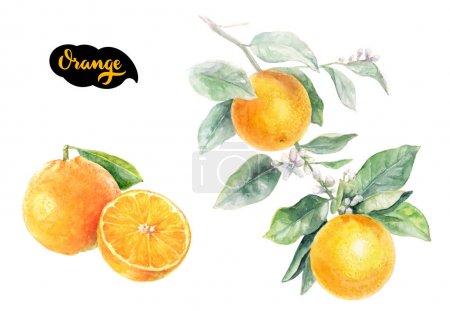 Photo pour Orange Citrus fruit isolé sur fond blanc, illustration aquarelle - image libre de droit