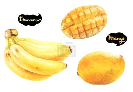 Mangoes and bananas fruits