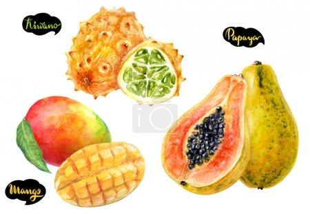 Papaya, mango, kiwano hand drawn watercolor illustration isolated on white background