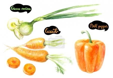 Carrot, green onion and bell pepper watercolor illustration. Kitchen herbs watercolor isolated on white background.