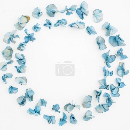 blue dried flower petals
