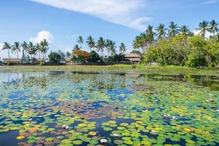 Lotus flowers on water surface