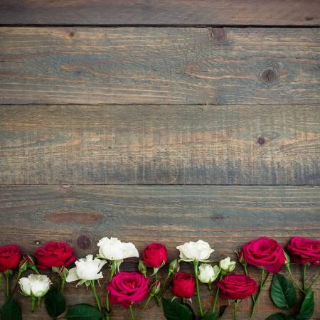 beautiful  red and white roses