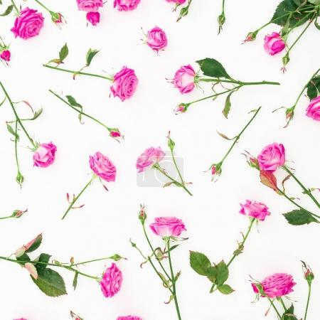Photo for Pink roses and leaves isolated on white background, Flat lay, Top view - Royalty Free Image
