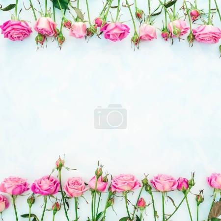 pink roses and leaves