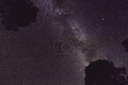 Night landscape with Milky Way and some trees in the mountains