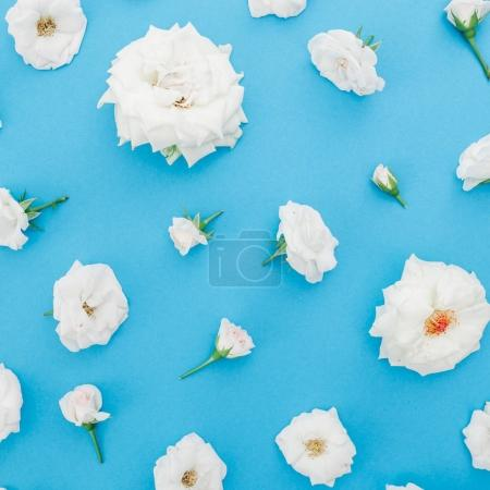 Floral frame made of white roses on blue background. Flat lay, Top view. Valentines day background