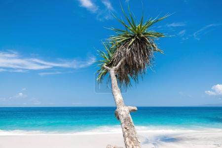 Tropical beach, blue ocean and palm in Bali
