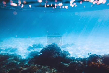 Photo pour Vue panoramique des coraux sous l'eau bleue - image libre de droit