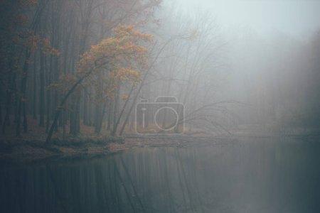 Photo pour Forêt dans le brouillard avec brouillard. Fée effrayant regarder les bois dans une journée brumeuse. Froid matin brumeux dans la forêt d'horreur avec des arbres - image libre de droit