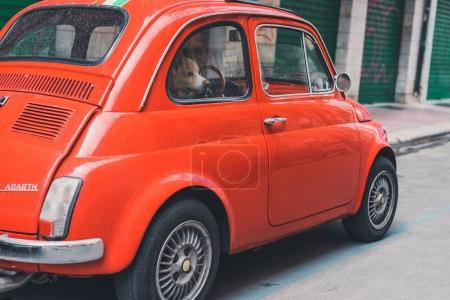 Dog sitting in red car