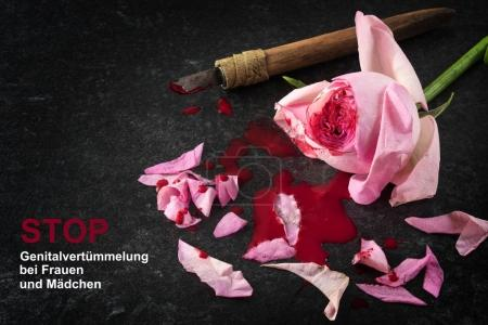 cut rose blossom, blood and knife on a dark stone background  with german text Stop Genitalverstuemmelung bei Frauen und Maedchen, that means Stop female genital mutilation