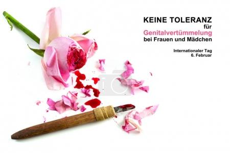 cut rose blossom, blood and knife isolated on a white background with german text Keine Genitalverstmmelung bei Frauen und Maedchen, that means zero tolerance for FGM, international day, date 6 february