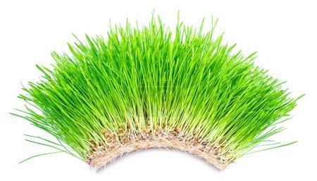 Green grass arch