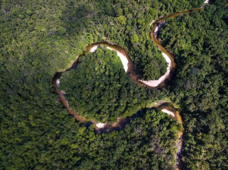 Top View of River in Rainforest, Brazil