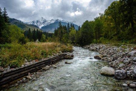 Photo pour Rivière de montagne en été avec ruisseau et haute eau dans la forêt. Rivière Bialka, Pologne - image libre de droit