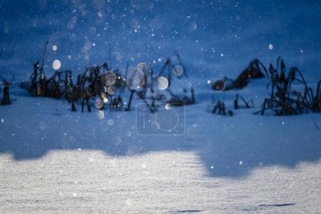 Photo pour Flocons de neige tombant dans le blizzard avec fond blanc neige avec les ombres et les textures de l'arbre - image libre de droit