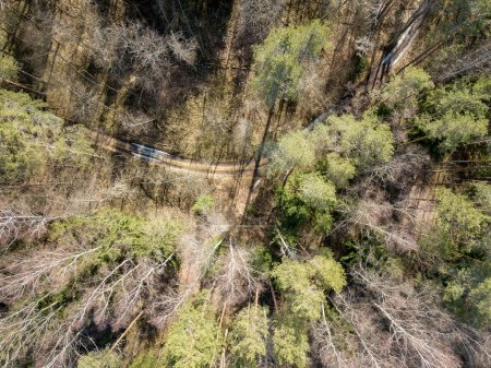 drone image. aerial view of forest from above trees with long sh
