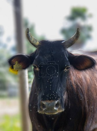 Beautiful Cow on meadow