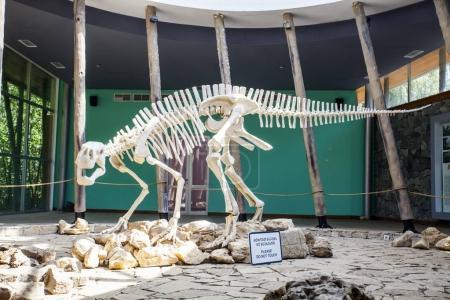 dinosaur skeleton in Saturnalia, Georgia