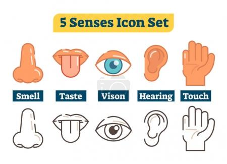 Illustration for Five human body senses: smell, taste, vision, hearing, touch. Vector flat illustration icons with nose, lips, tongue, eye, ear and hand. Color and outline style. - Royalty Free Image