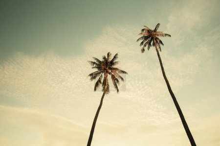 Two palms on evening sky