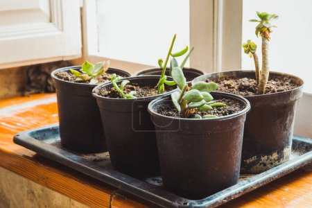 Potted plants composed on tray