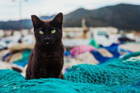 Black cat on net in port