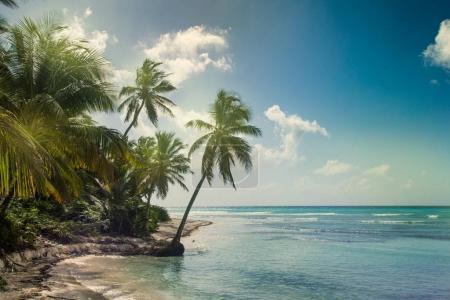 Beach with coconut palm,  uninhabited tropical island