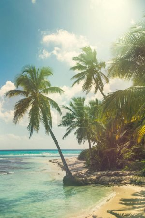 Beach with coconut palms