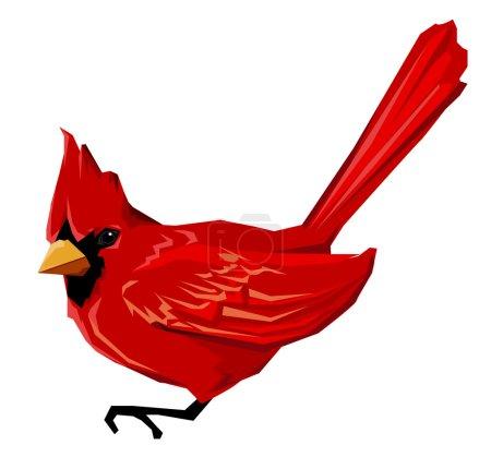Red Cardinal bird isolated