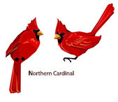 Vector illustration of Northern cardinals Red Cardinal birds