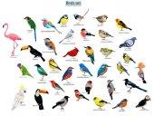 big set icons of birds