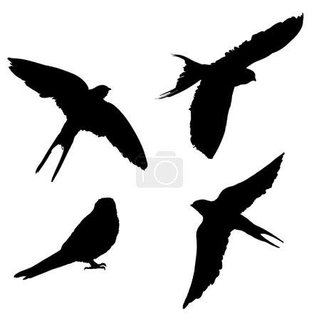 Illustration pour Silhouettes d'oiseaux isolées sur fond blanc vecteur - image libre de droit
