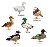 set of different ducks