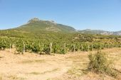 Vineyards at the foot of the mountain.