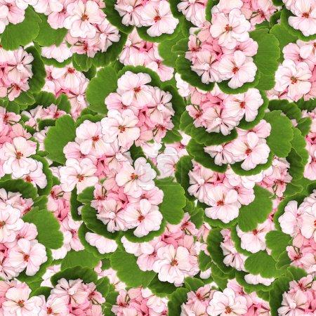 Seamless background pattern texture made of geranium