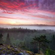 Early summer morning dawn in foggy forest valley i...