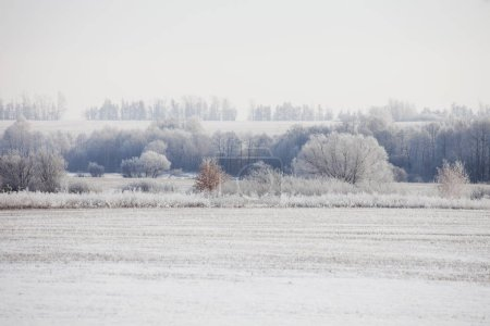 Winter landscape. Frozen trees, Russia, Bashkortostan