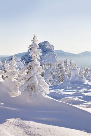 Winter landscape. Snow covered fir trees. Mountain range Zyuratk