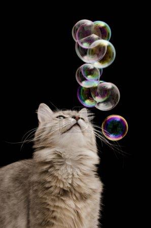 Photo pour Chat avec des bulles de savon sur fond noir isolé - image libre de droit