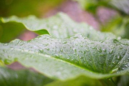 Photo pour Fond vert naturel avec mise au point sélective. - image libre de droit