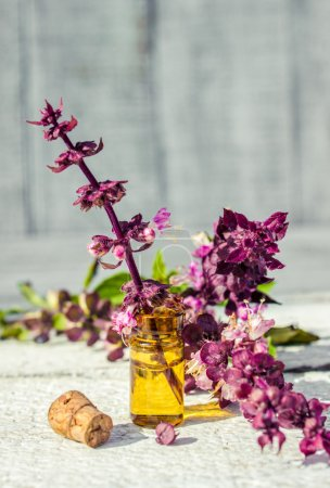 Photo for Drugs herbs extract Basil in a small bottle - Royalty Free Image