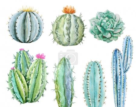 Photo for Beautiful image with hand drawn watercolor cactus - Royalty Free Image