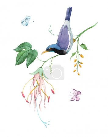 Photo pour Watercolor birds of paradise on branch with tropical gentle pink flowers. White isolated background. Stock hand drawn illustration - image libre de droit