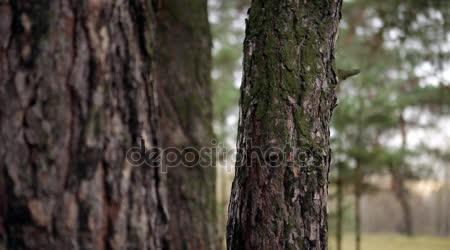 Dívka sedí v borovice ochranný oblek podzim