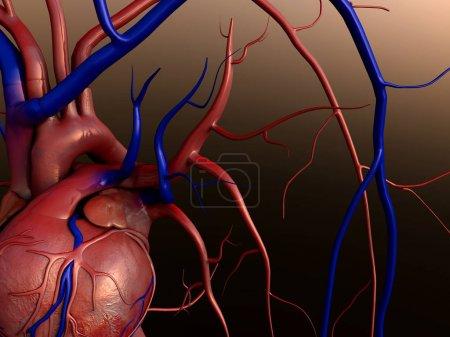 Photo pour Partie de coeur, coeur modèle w/détourage, détourage complet inclus, cœur de l'homme pour l'étude médicale, anatomie du cœur - image libre de droit