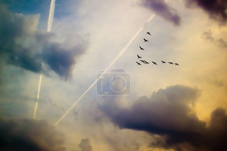 Crane wedge among the clouds on the background of ...