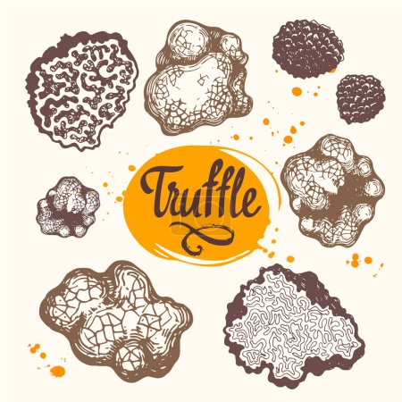 Photo for Vector illustration with set of mushrooms in sketch style. Hand-drawn truffle on white background. French delicatessen. Autumn forest harvest. - Royalty Free Image